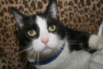 Mush is 11 years old, is front declawed and is a poly-dactyl cat!